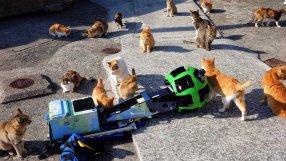 Cats.2e16d0ba.fill-1280x720