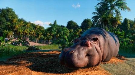 planetzoo_hippopotamus1