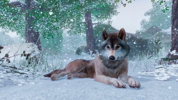 planetzoo_timberwolf1